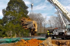 Clean up of Storm Damaged White Oak at Tanglewood 10