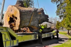 Clean up of Storm Damaged White Oak at Tanglewood 5