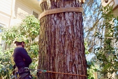 Hazardous Tree Removal 1