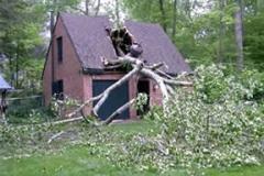 Hazardous Tree Removal 11