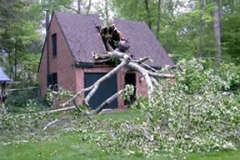 Hazardous Tree Removal 12