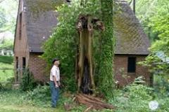 Hazardous Tree Removal 13