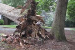Hazardous Tree Removal 15