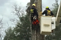 Hazardous Tree Removal 3
