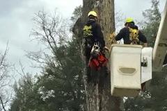 Hazardous Tree Removal 3