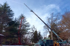 Hazardous Tree Removal 4