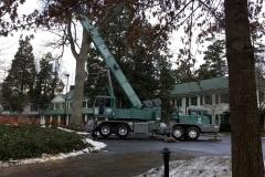 Hazardous Tree Removal 5