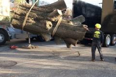 Hazardous Tree Removal 8.mov