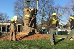 Hazardous Tree Removal 9
