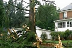 Tree Lightning Damage 2