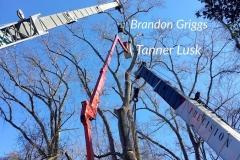 Lusk Tree Trimming 2