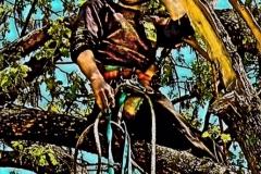 Lusk Tree Trimming 4