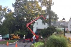 Lusk Tree Trimming 5