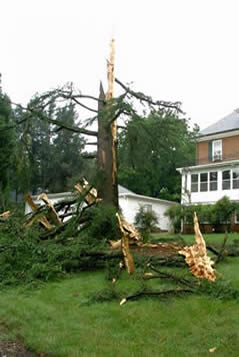 tree-lightning-damage