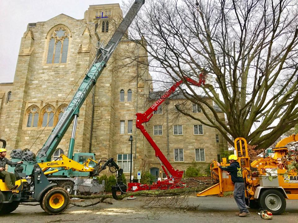 removal-of-willow-tree-1