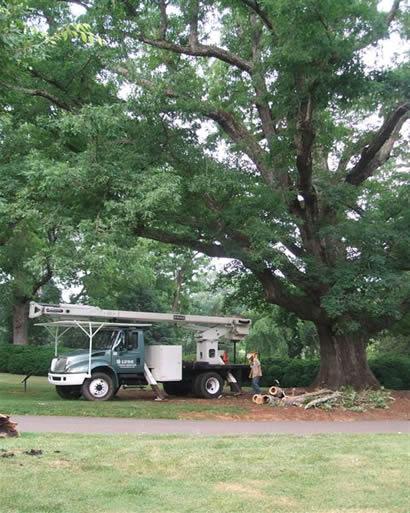 tree_pruning-2